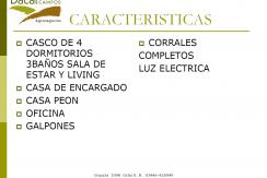 LOS ROSALES PAG 13