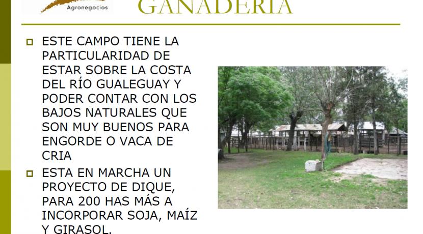 LOS ROSALES PAG 14